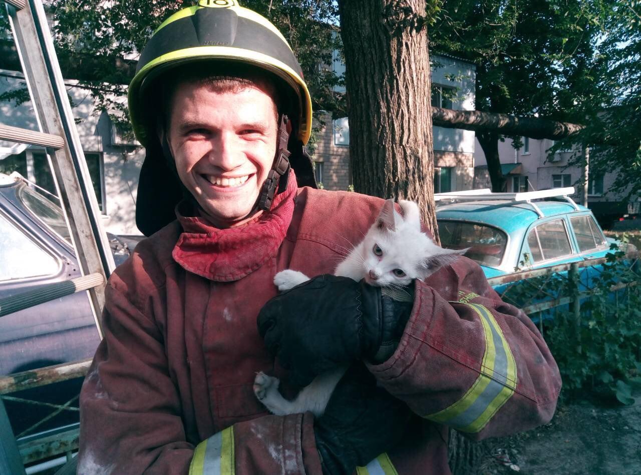 У Дніпрі пожежні з добрим серцем зняли двох кошенят з дерева. ВІДЕО