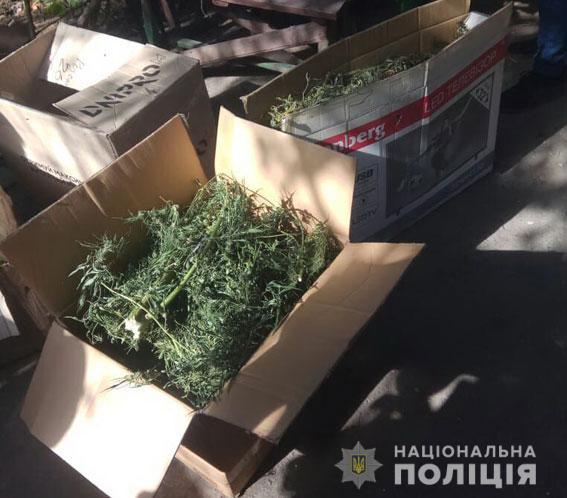 У Сумах поліція 'допомогла' зібрати врожай ще одному наркоаграрію. ФОТ
