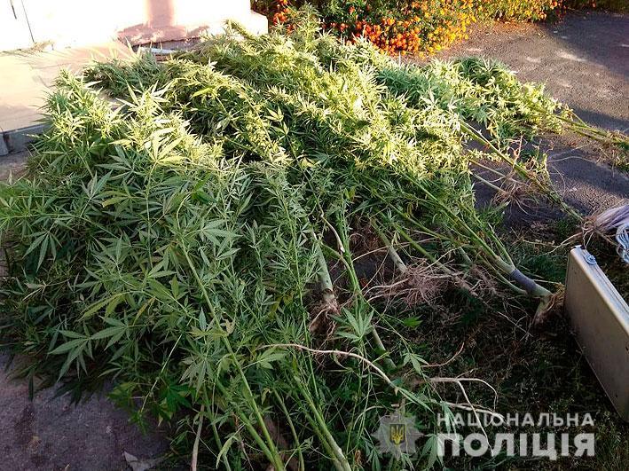 На Чернігівщині викрили плантацію коноплі. ФОТО