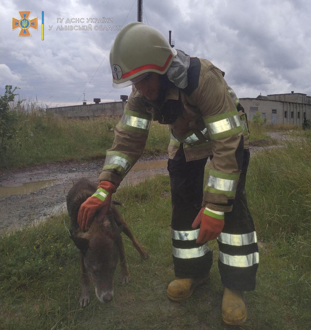 Живи, чотирилапий! На Львівщині пожежні врятували необачного собаку. Ф